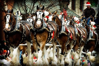 25th annual Historic Christmas Festival and Horse Drawn Carriage Parade on Saturday, December 7, 2013 ~ the details: http://www.lebanonchamber.org/pages/events/default/30/